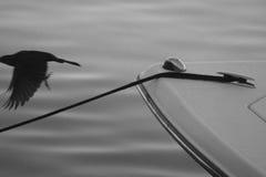 Шлюпка и птица Стоковые Изображения