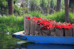 Шлюпка канала вполне сумок свежего Poinsettia - цветка Xmas/рождества в Xochimilco Стоковые Фотографии RF