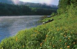 Шлюпка на банке реки Стоковые Изображения