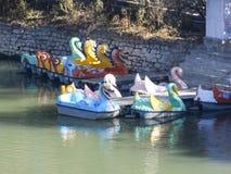 Шлюпки лебедя в реке стоковые изображения