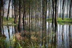 Шлюпки на реке Стоковое Изображение
