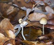 Шляпа на грибе Стоковые Изображения