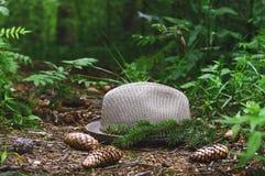 Шляпа на пути в лесе, конусах сосны и ветви дерева Стоковое Изображение