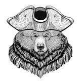 Шляпа пирата большого одичалого медведя гризли нося взвела курок шляпе, tricorn матросу, моряку, моряку, или моряку Стоковая Фотография RF