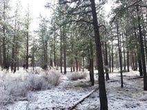 Шляпа фарфора Snowy в загибе Орегоне Стоковое Изображение