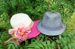 2 шляпы на дереве Стоковые Изображения