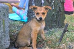 Щенок бездомной собаки рассеянный Стоковые Изображения