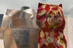Щенок Бильбао Стоковая Фотография