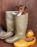 щенок ботинка Стоковое Фото