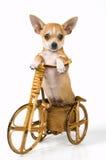 щенок велосипеда Стоковая Фотография RF