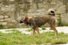 щенок влажный стоковое фото rf