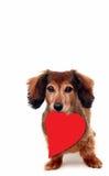 щенок влюбленности Стоковые Фотографии RF