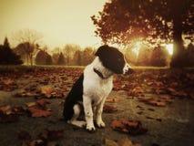 Щенок в заходе солнца Стоковое фото RF