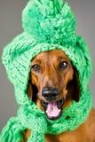 Щенок в зеленом цвете стоковое изображение