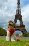 Щенок в Париже Стоковое Изображение