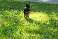 Щенок в саде Стоковое Фото