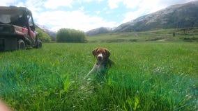 Щенок в траве стоковые фото