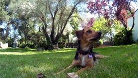 Щенок в траве видеоматериал
