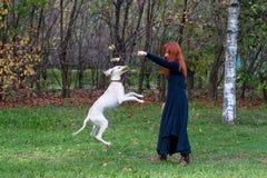 щенок девушки Стоковые Фото