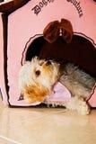 щенок дома Стоковые Изображения