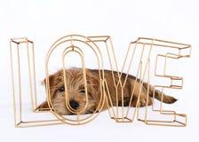 Щенок лежа за влюбленностью слова Стоковое Фото