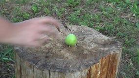 Щенок замедленного движения принимает яблоко акции видеоматериалы
