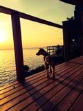 Щенок захода солнца Стоковое фото RF