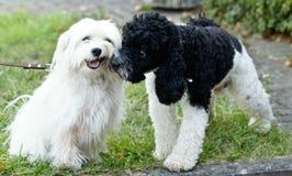 щенок игры собак к Стоковое Изображение