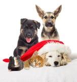 Щенок и котенок labrador рождества Стоковая Фотография RF