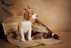 Щенок и фазан Стоковое Изображение