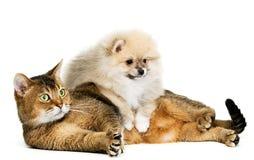 щенок кота Стоковые Изображения