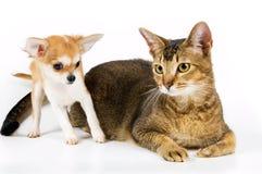щенок кота Стоковая Фотография RF