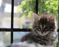 щенок кота стоковые изображения rf