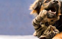 щенок котенка