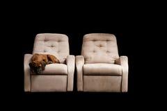 щенок кресла Стоковые Фото