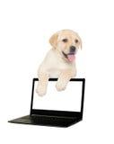 Щенок Лабрадора и компьютер Стоковая Фотография RF