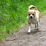 щенок малый стоковое изображение