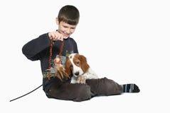 щенок малыша с Стоковая Фотография RF