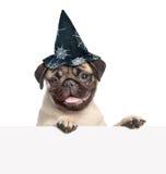 Щенок мопса с шляпой на хеллоуин peeking от задней пустой доски На белизне Стоковые Фотографии RF