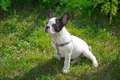 Щенок на траве Стоковые Фото