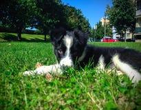 Щенок на траве Стоковые Изображения RF