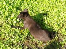 Щенок на яркой ой-зелен траве Стоковые Изображения