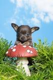 Щенок на toadstool Стоковые Фото