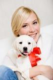 Щенок обнимать женщины labrador с красной лентой Стоковое Изображение