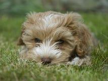 щенок парка стоковое изображение