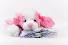щенок пеленок Стоковое Фото