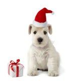 щенок подарка рождества Стоковые Фото