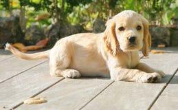 щенок портрета стоковые фото