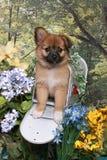щенок почтового ящика shaggy Стоковая Фотография