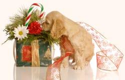 щенок рождества Стоковые Фото